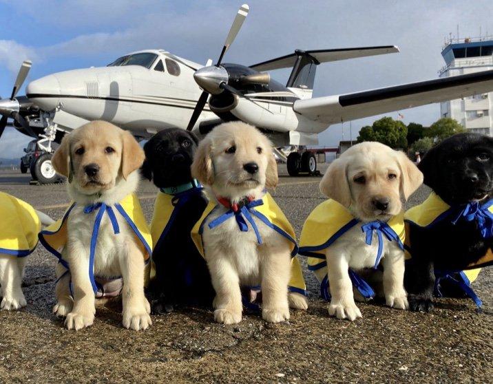 A new venture: Puppy Raiser